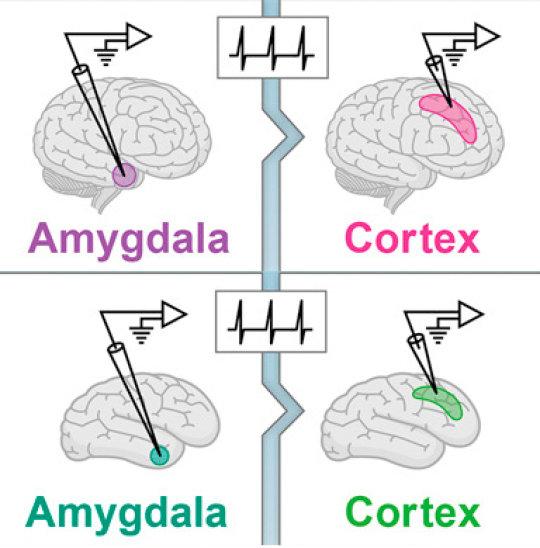 Нейронный код