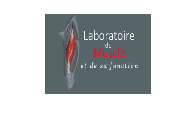 Laboratoire du Muscle et de sa function