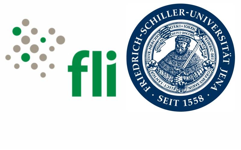 FLI FSU