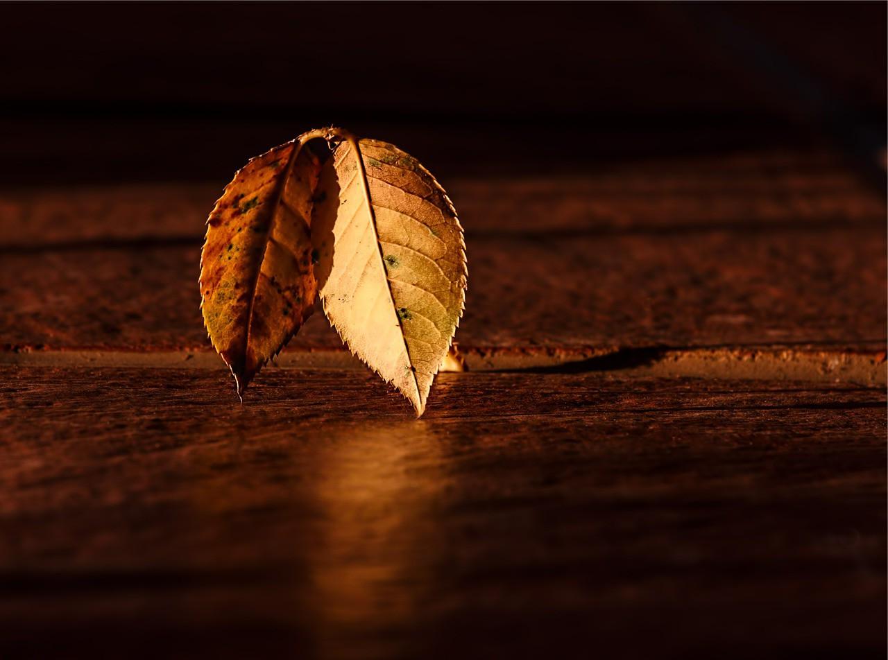 Возможность Вечности - Старение
