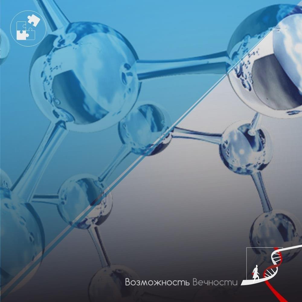 Осьминоги могут помочь совершить революцию в трансплантологии