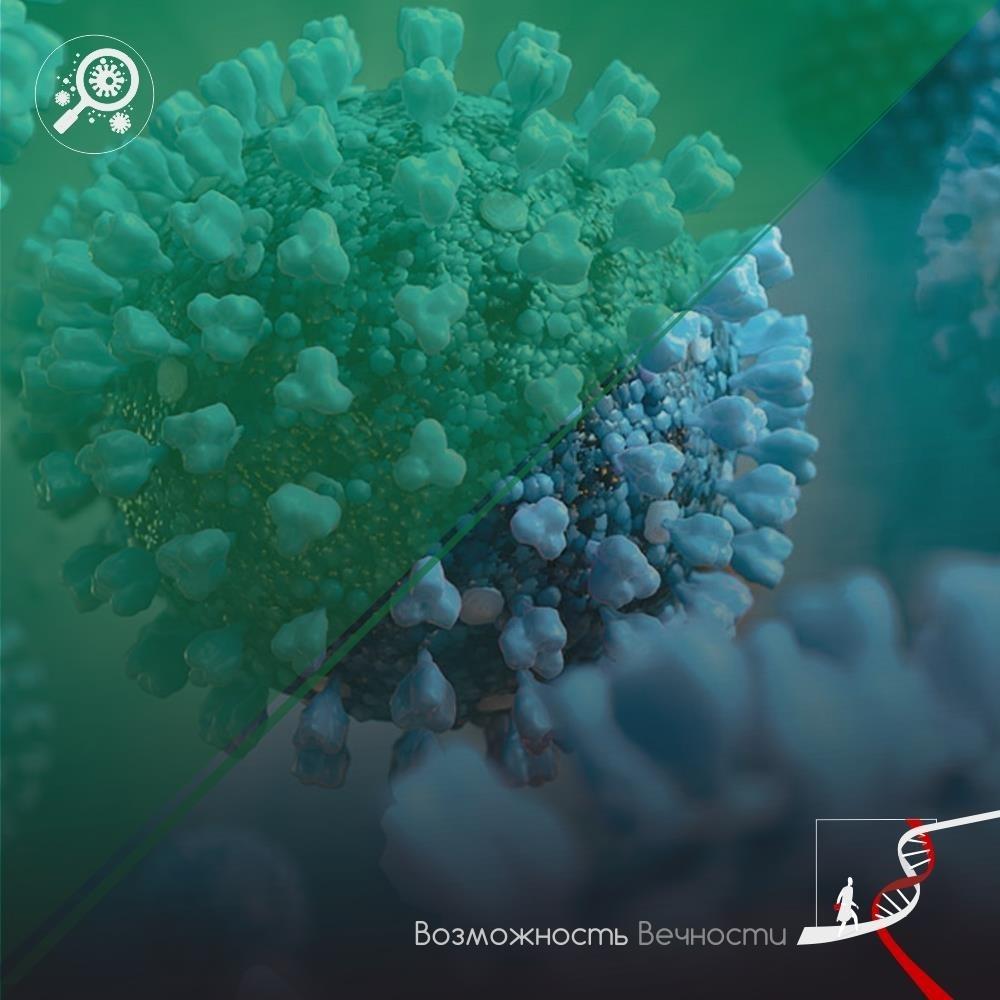 Грибки общаются с бактериями в сыре с помощью запахов